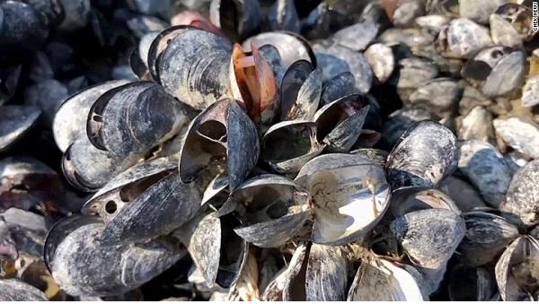 canada extreme heat cooked 1bn marine animals